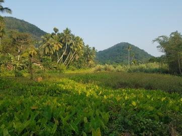 SriLankafields