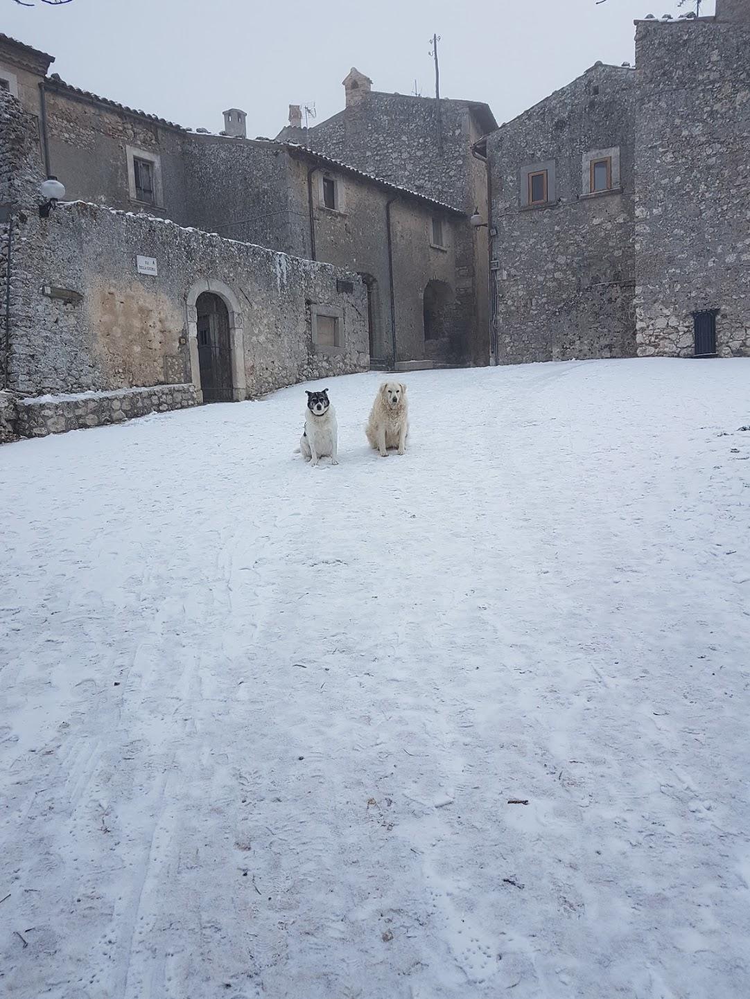 Santostefdogs